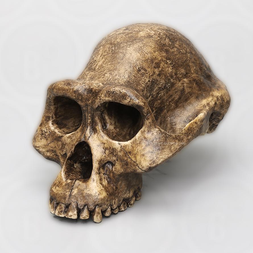 preistoria-australopithecus