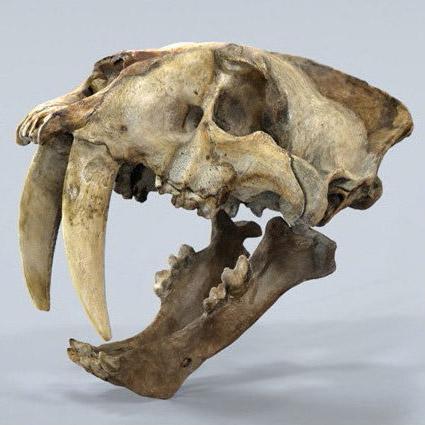preistoria-smilodon